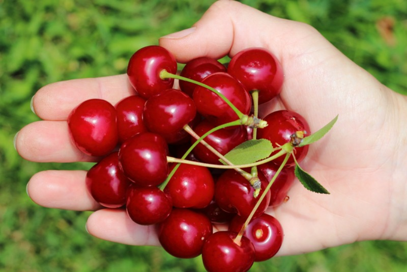 An image of a handful of cherries