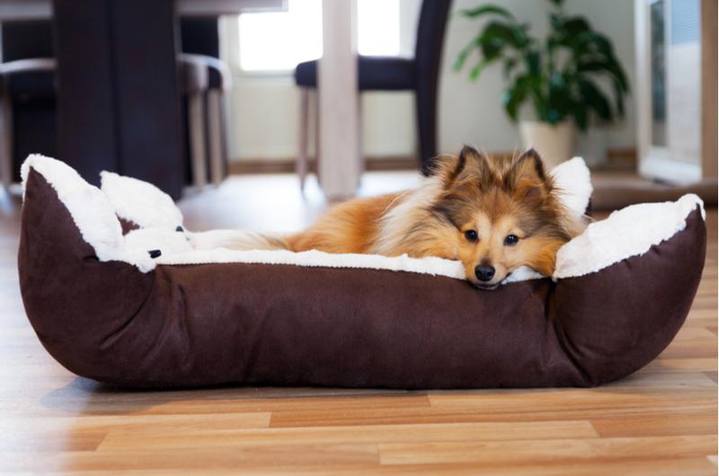 Dog asleep in dog bed