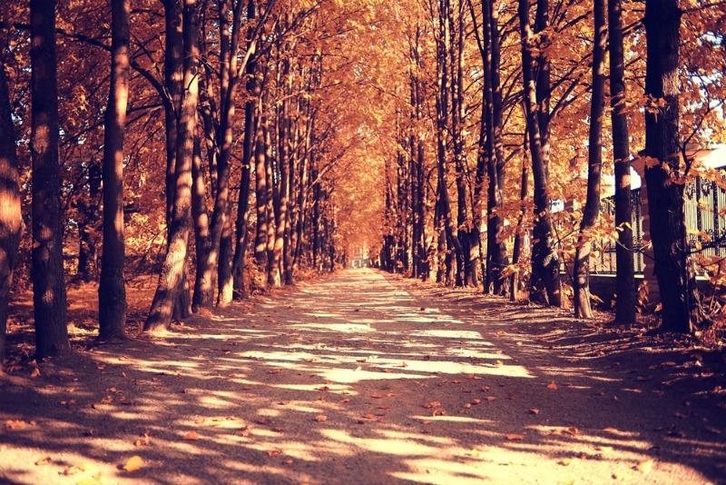 Image of autumnal walk