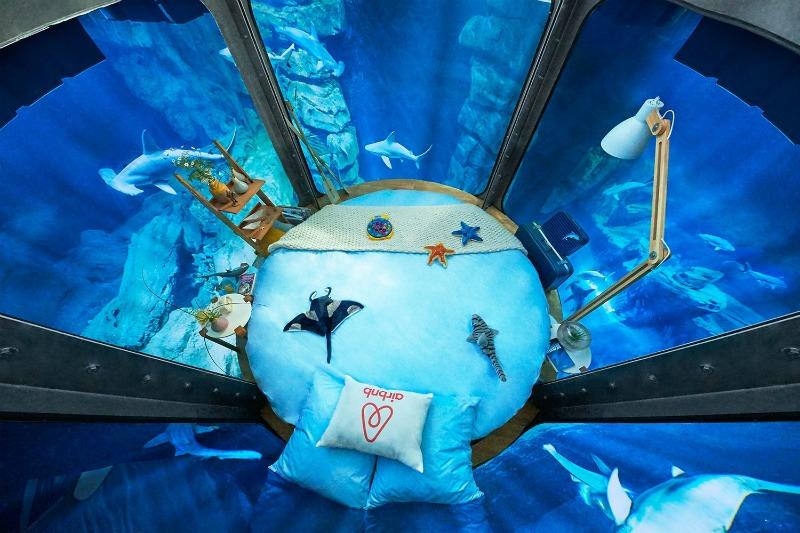 An image of the Shark Aquarium
