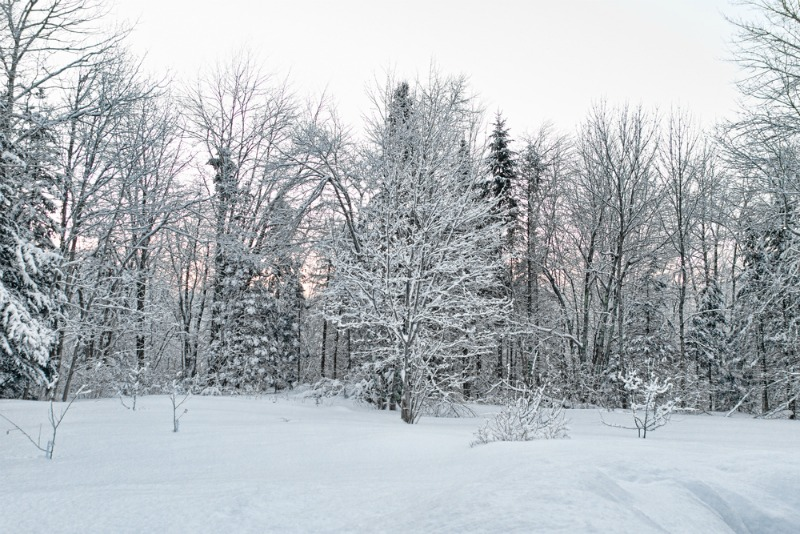 Image of a wintry forest