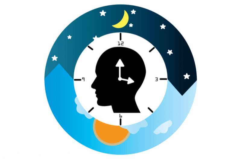 circadian rhythm to show why the sun makes you tired