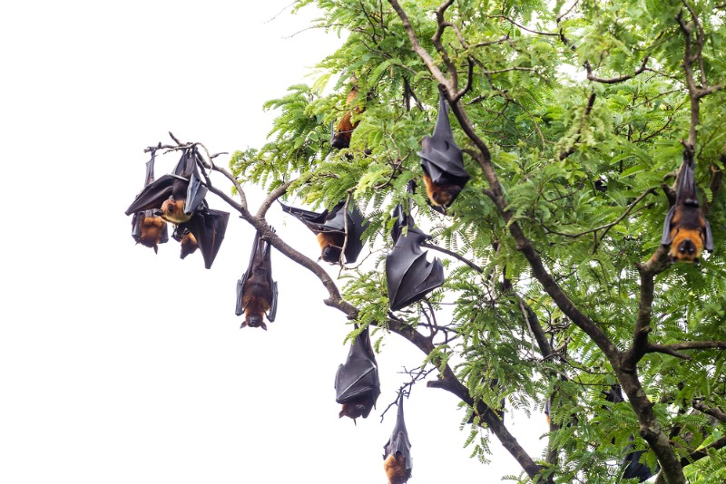 Bats sleep upside down to reduce competition for sleeping spots