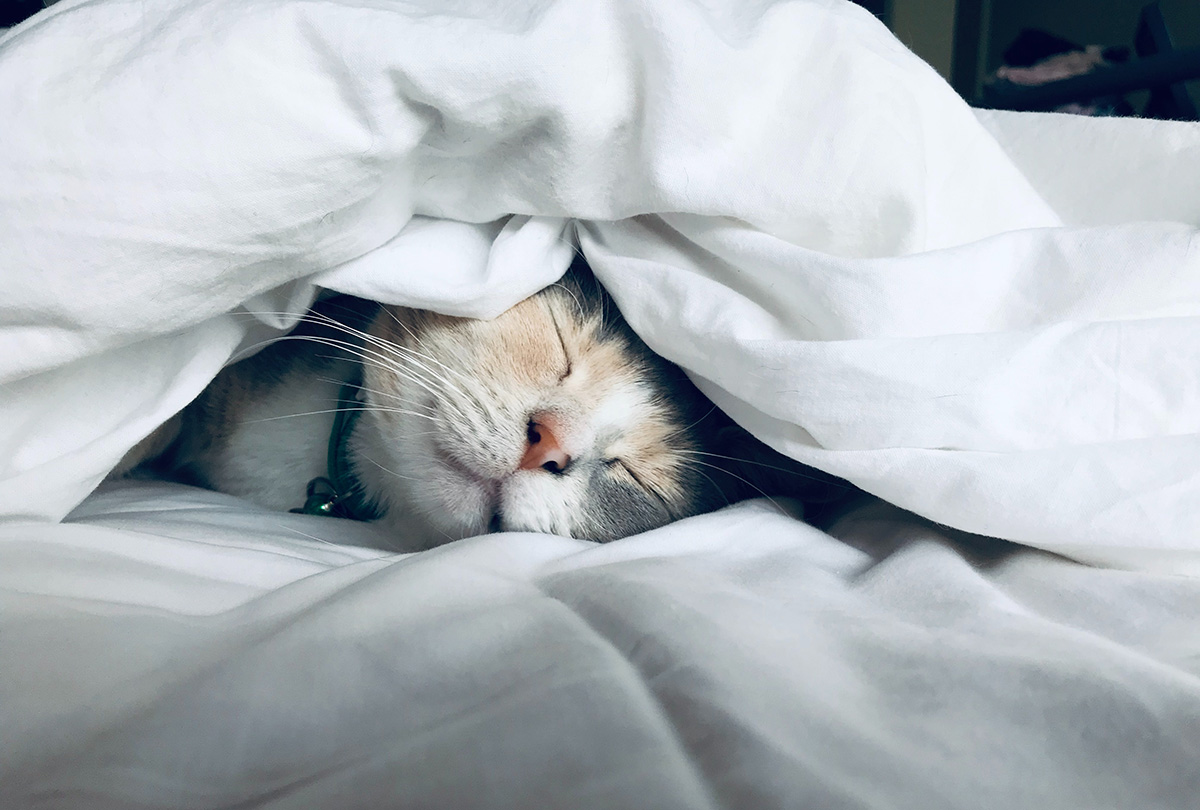 cat sleeping underneath a duvet