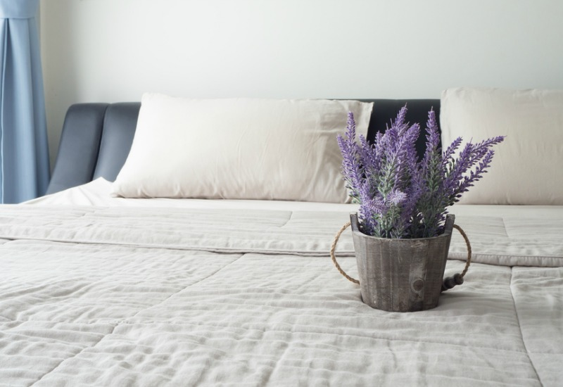 Lavender plant in a wooden pot on top of a bed