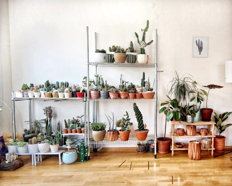 image of house plants to show botanical interior design trend
