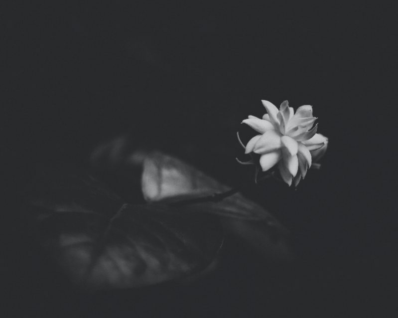 Image of jasmine flower for sleep