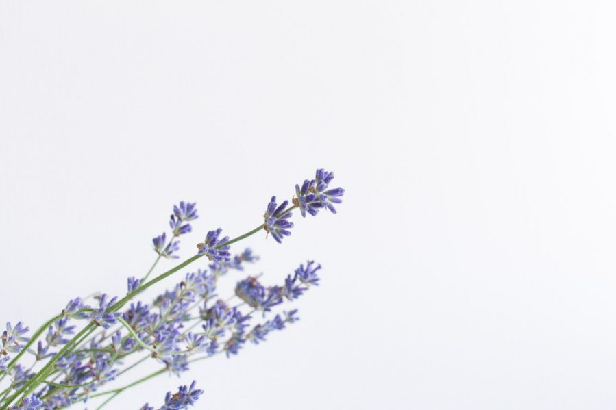 image of lavender for sleep
