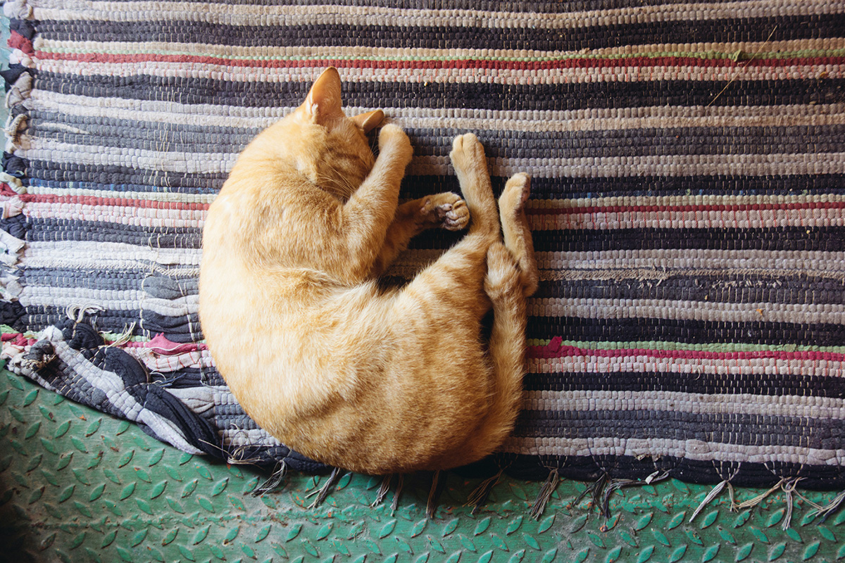 cat sleeping in strange twisted position