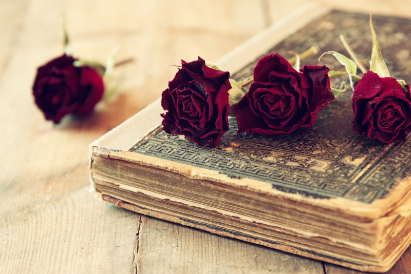 Image of a romantic novel and roses