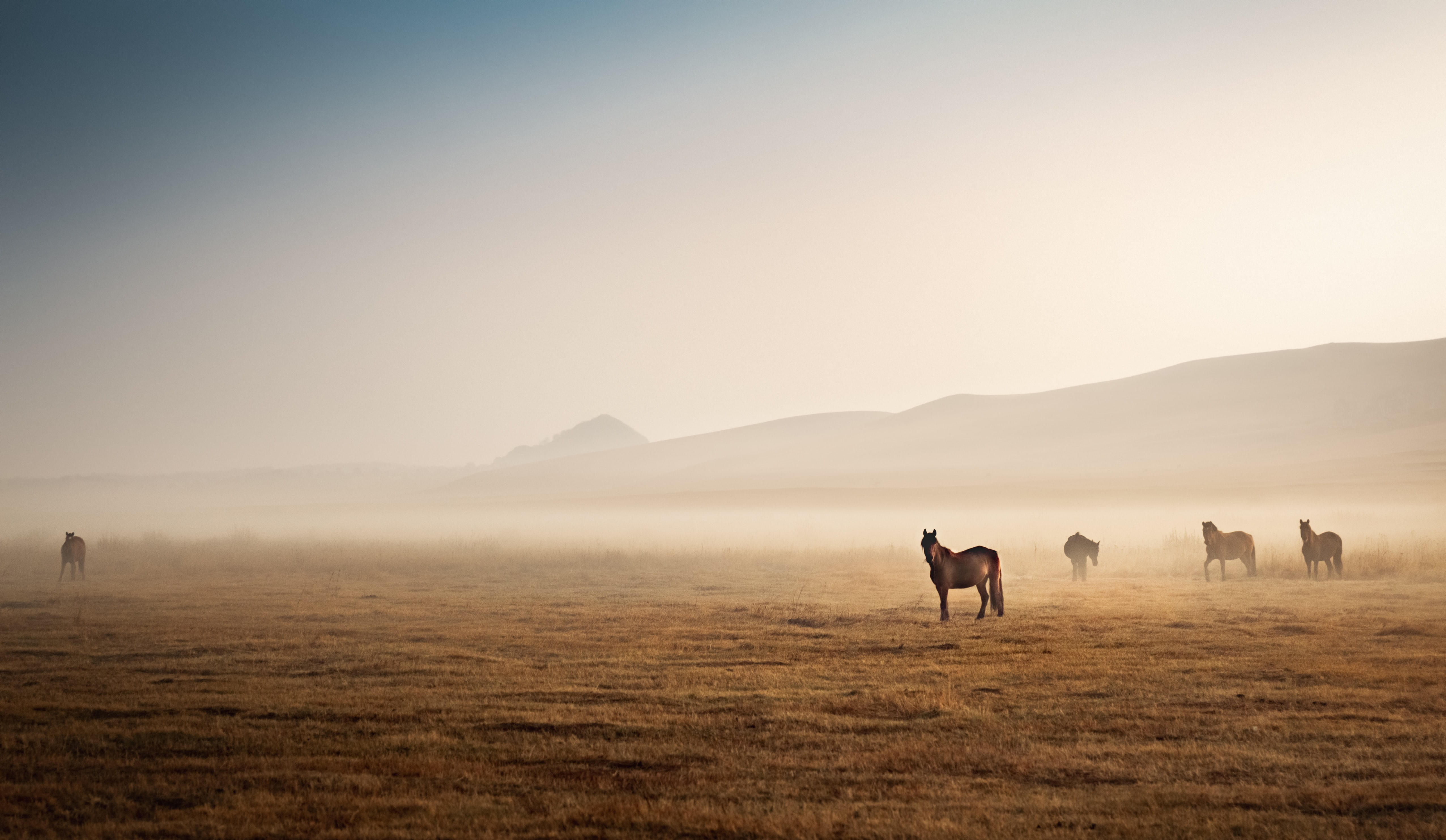 horse in distance with mountains in background